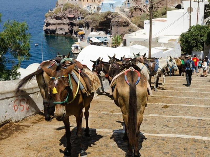 Donkeys in Santorini