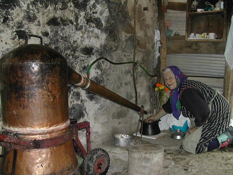 Tsipouro distillation